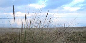 Strandgraeser vor Kueste